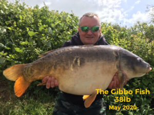 The Gibbo Fish - 38lbs